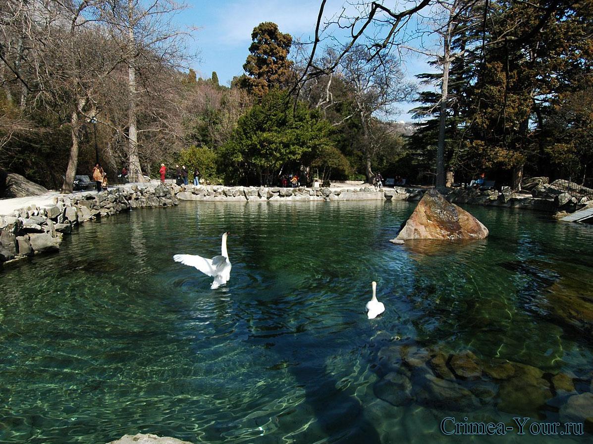 Алупка. Озеро лебедей в Воронцовском парке