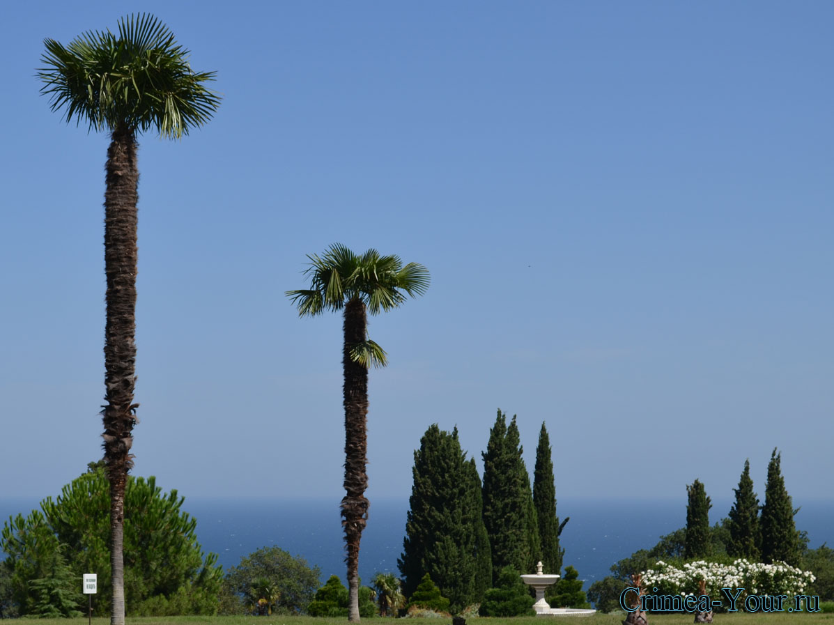Вид на море со стороны Ливадийского дворца в Крыму