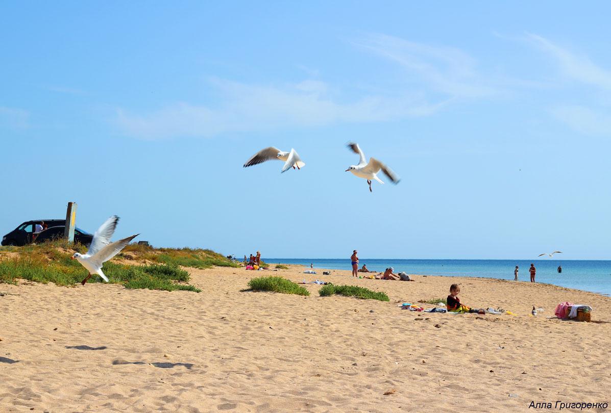Евпатория. Дикий пляж у посёлка Заозёрного