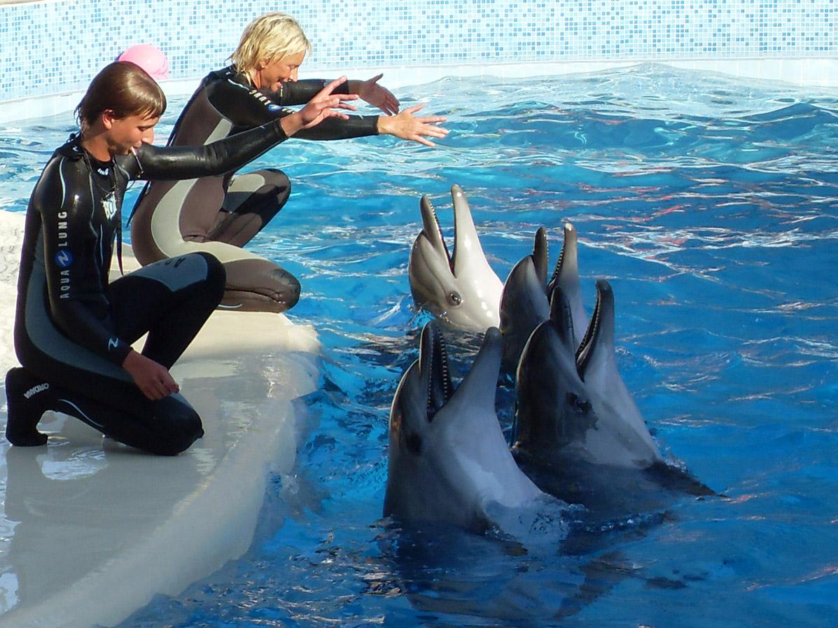 Новый дельфинарий в Коктебеле