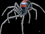 Опасные насекомые Крыма